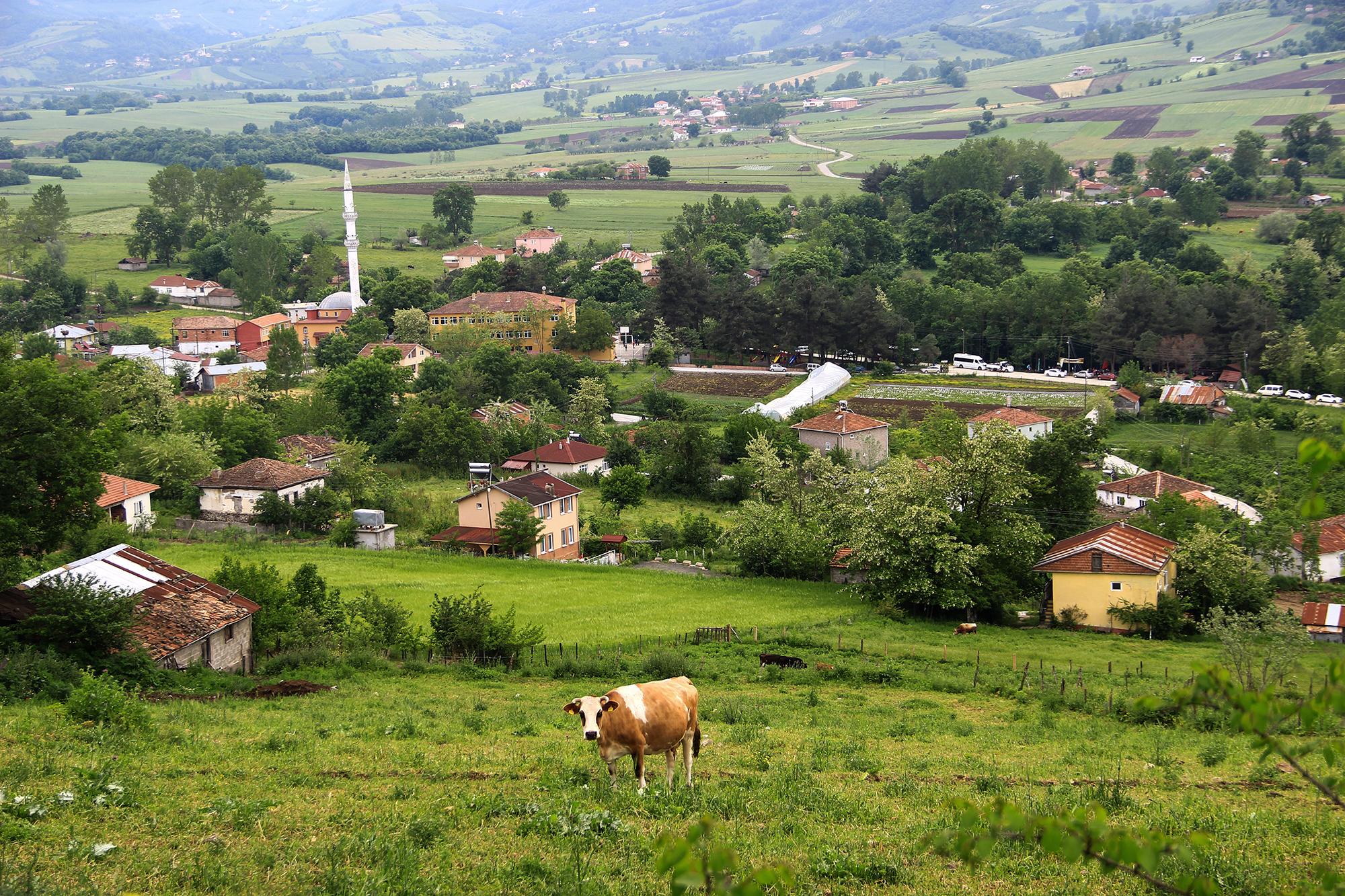 Organic Agriculture in Sürmeli